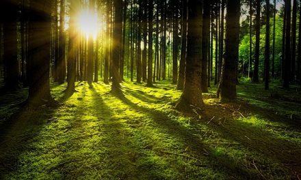 Igre u prirodi, šumska medicina, Holi Kids