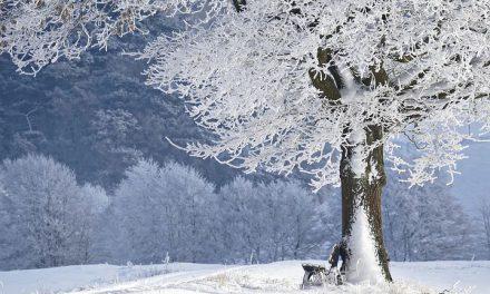 Zimski raspust u Holiju